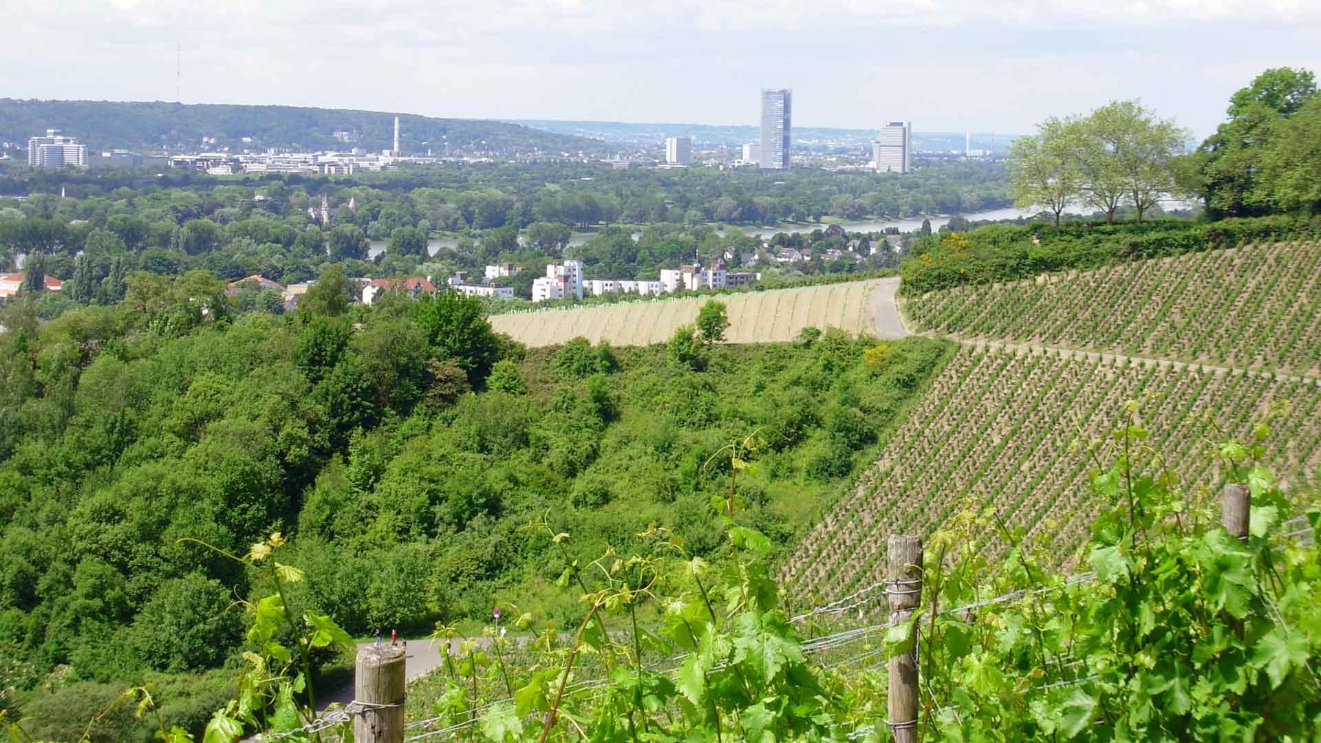 Bonn_Wijnbergen_F-14516774_C_marvellousworld