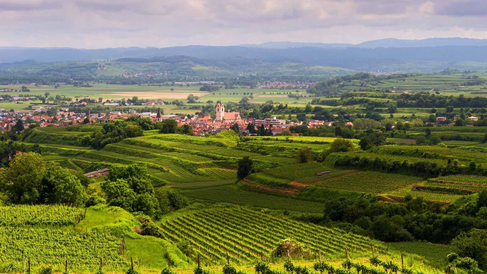 De glooiende wijngaarden in de Kaiserstuhl.