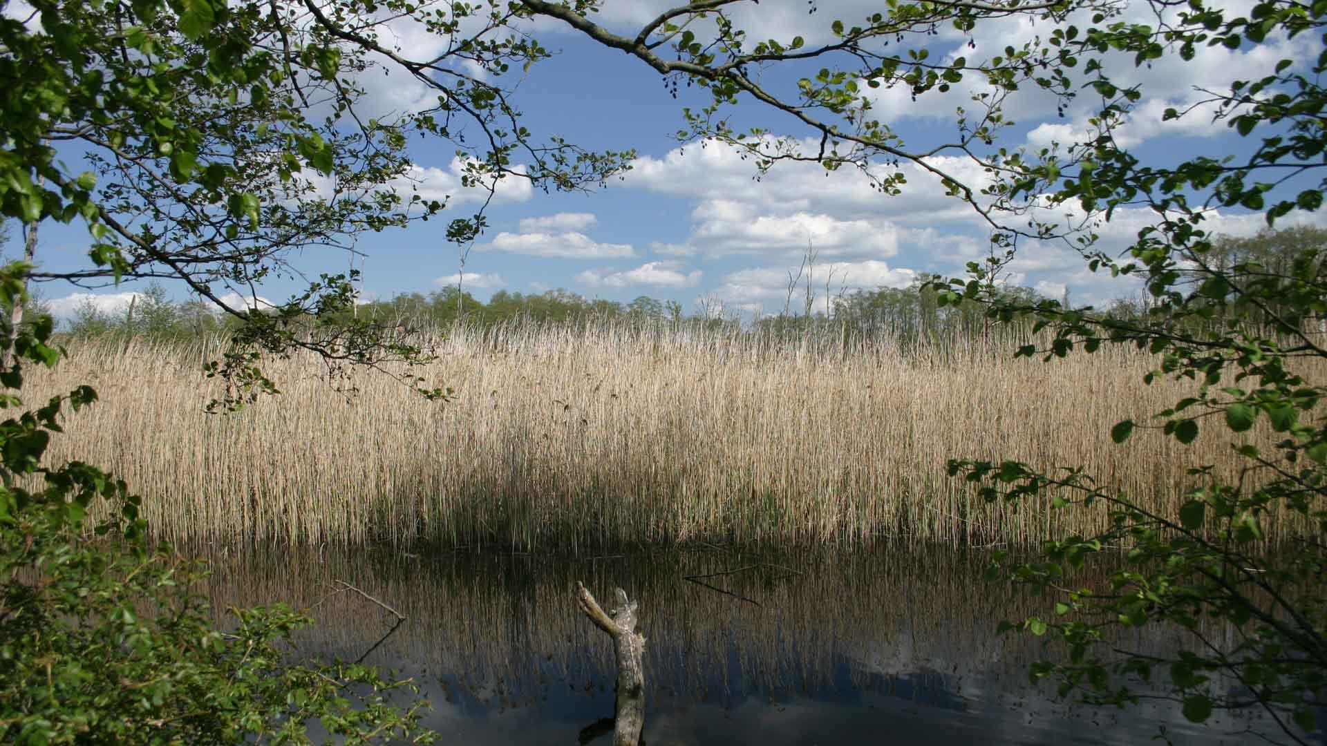 Genieten van de rust en het water in het Mecklenburger Seenland. © Martina Berg - Fotolia.com