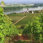 Uitzicht over Nierstein en de Rijn.