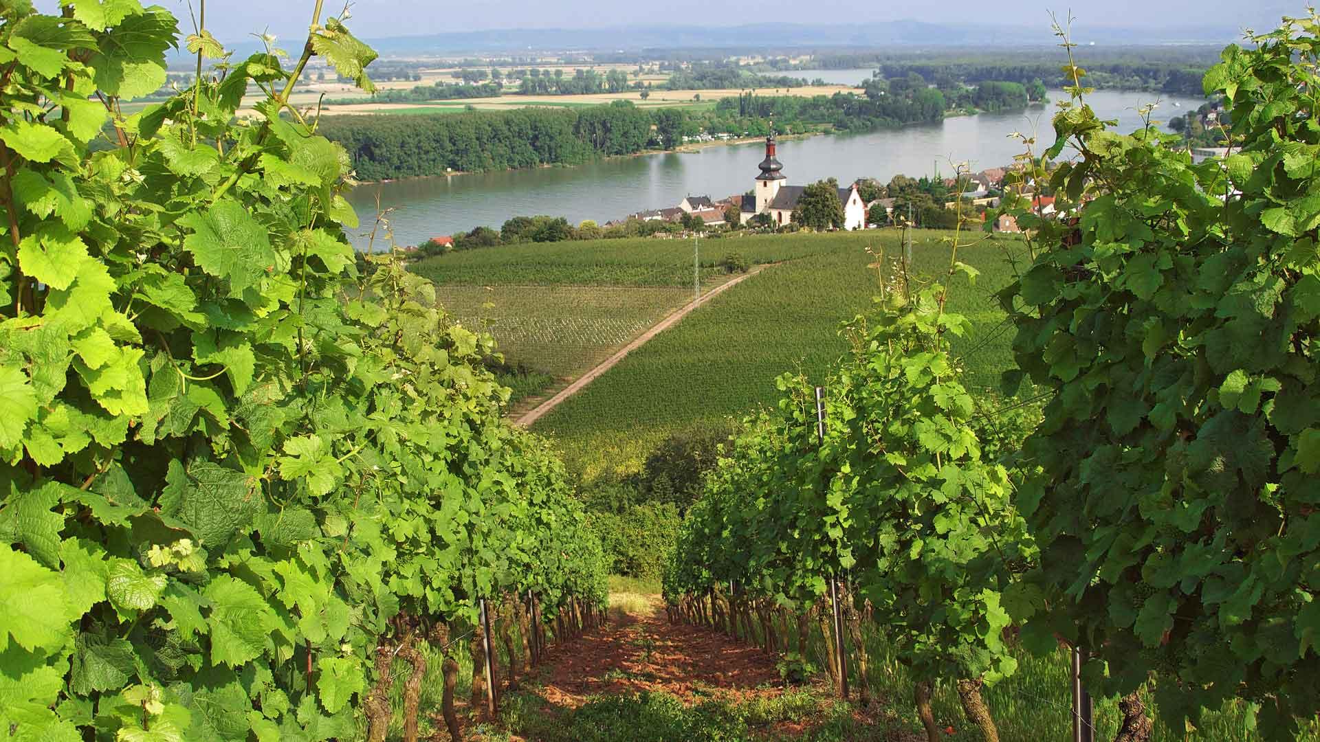 Uitzicht over de Rieslingstad Nierstein aan de Rijn.