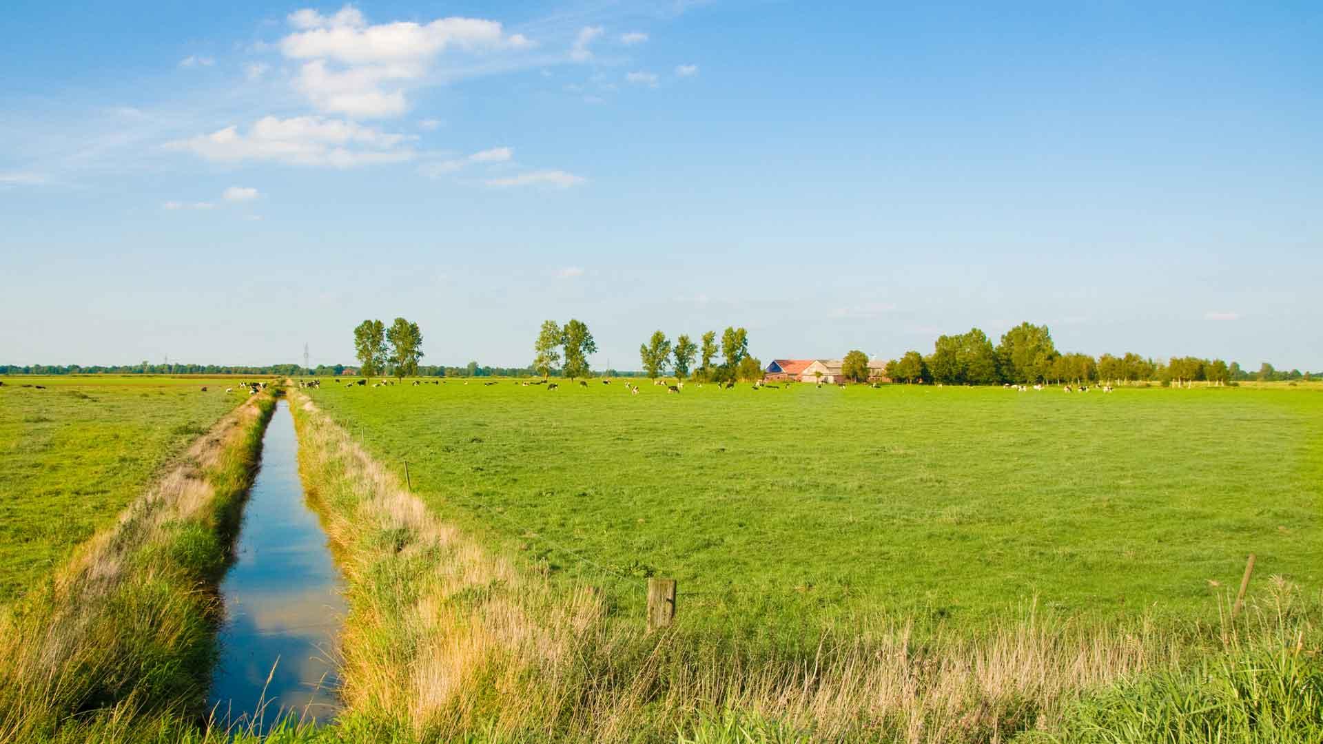 Het weidse landschap van Ostfriesland.