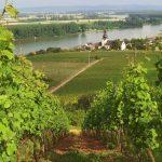 De wijnbergen bij Nierstein: een van de hoogtepunten van een fiets-vaarvakantie op de Rijn. © Clearlens - fotolia.com