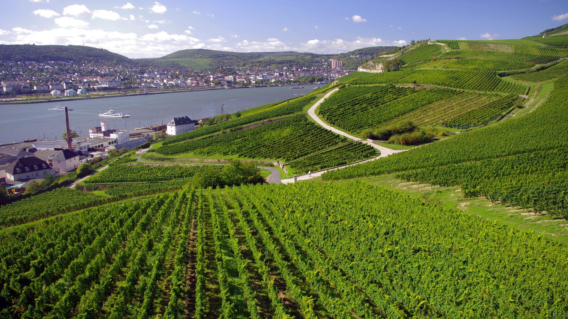 Uitzicht over Bingen, Rüdesheim en de Rijn. © Reinhard Pantke - SE-Tours