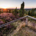 Geniet tijdens je fietsreis Lüneburger Heide van dit uitzicht vanaf de Wilseder Berg urger Heide.