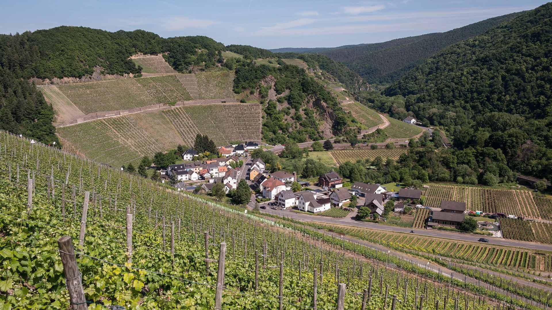 In Marienthal in het Ahrtal wordt vooral rode wijn geproduceerd.
