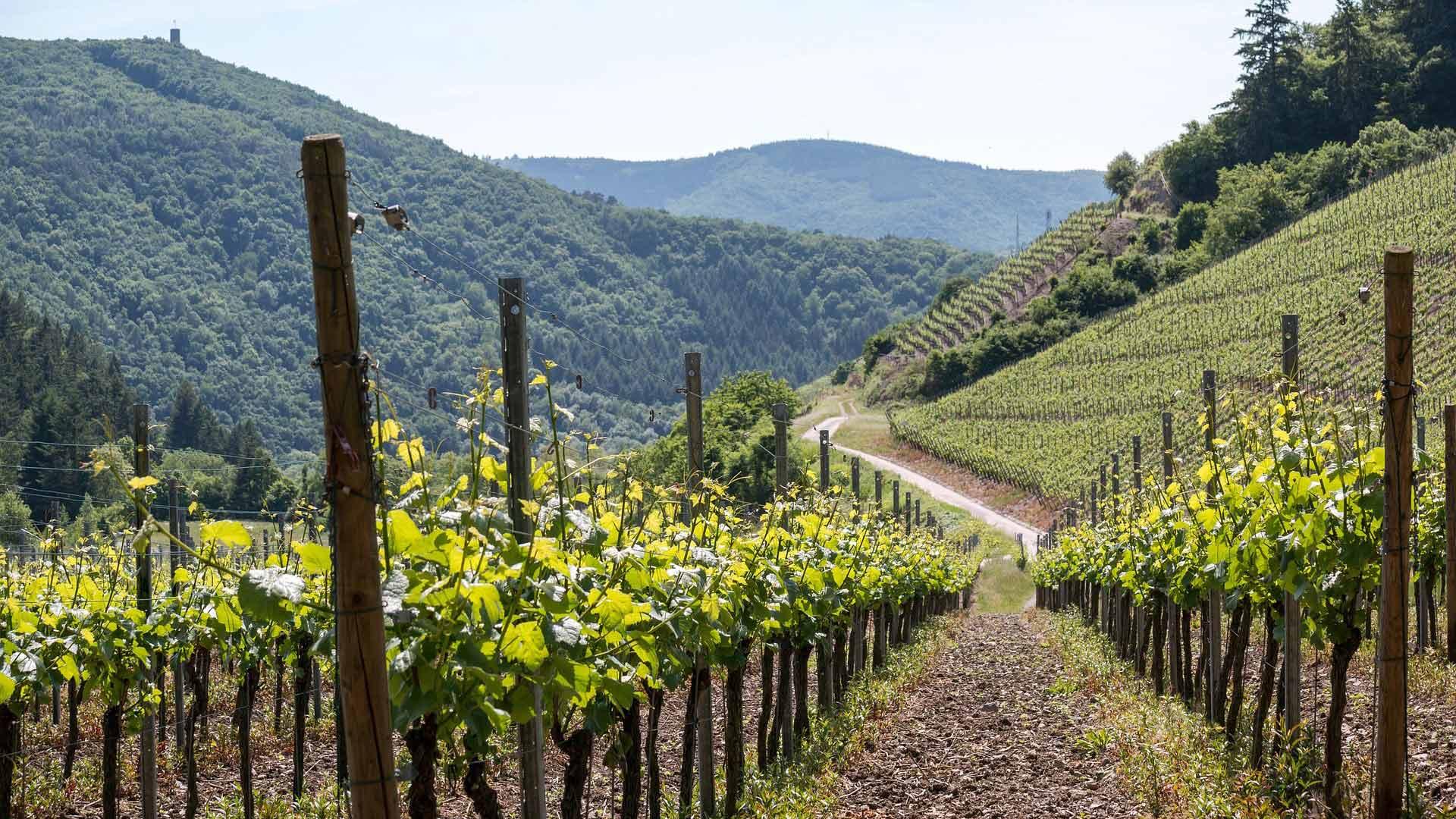 Wijnbergen bij Ahrweiler.