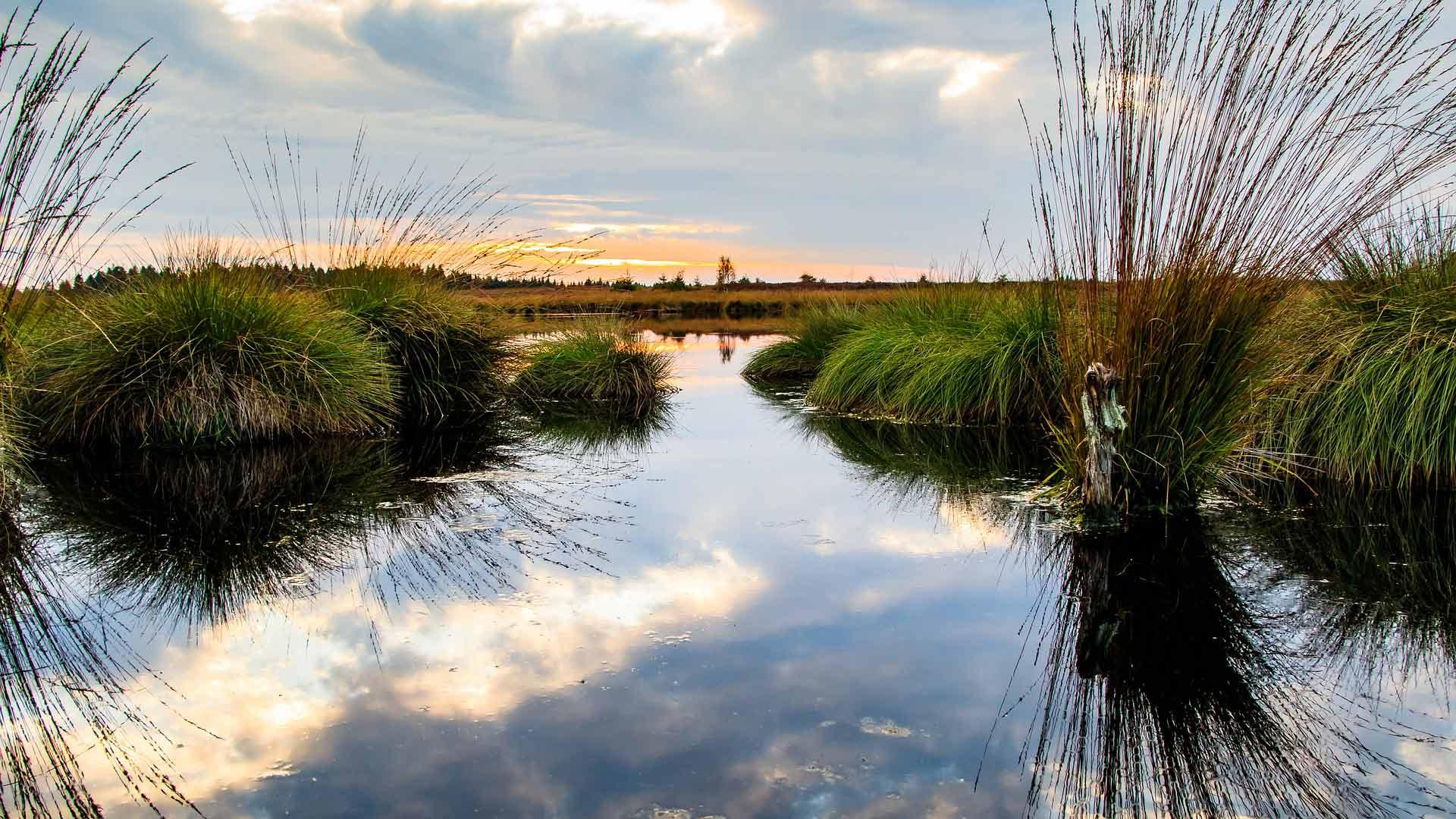 De Hoge Venen is een schitterend hoogveen gebied op de grens van de Belgische Ardennen en de Eifel.
