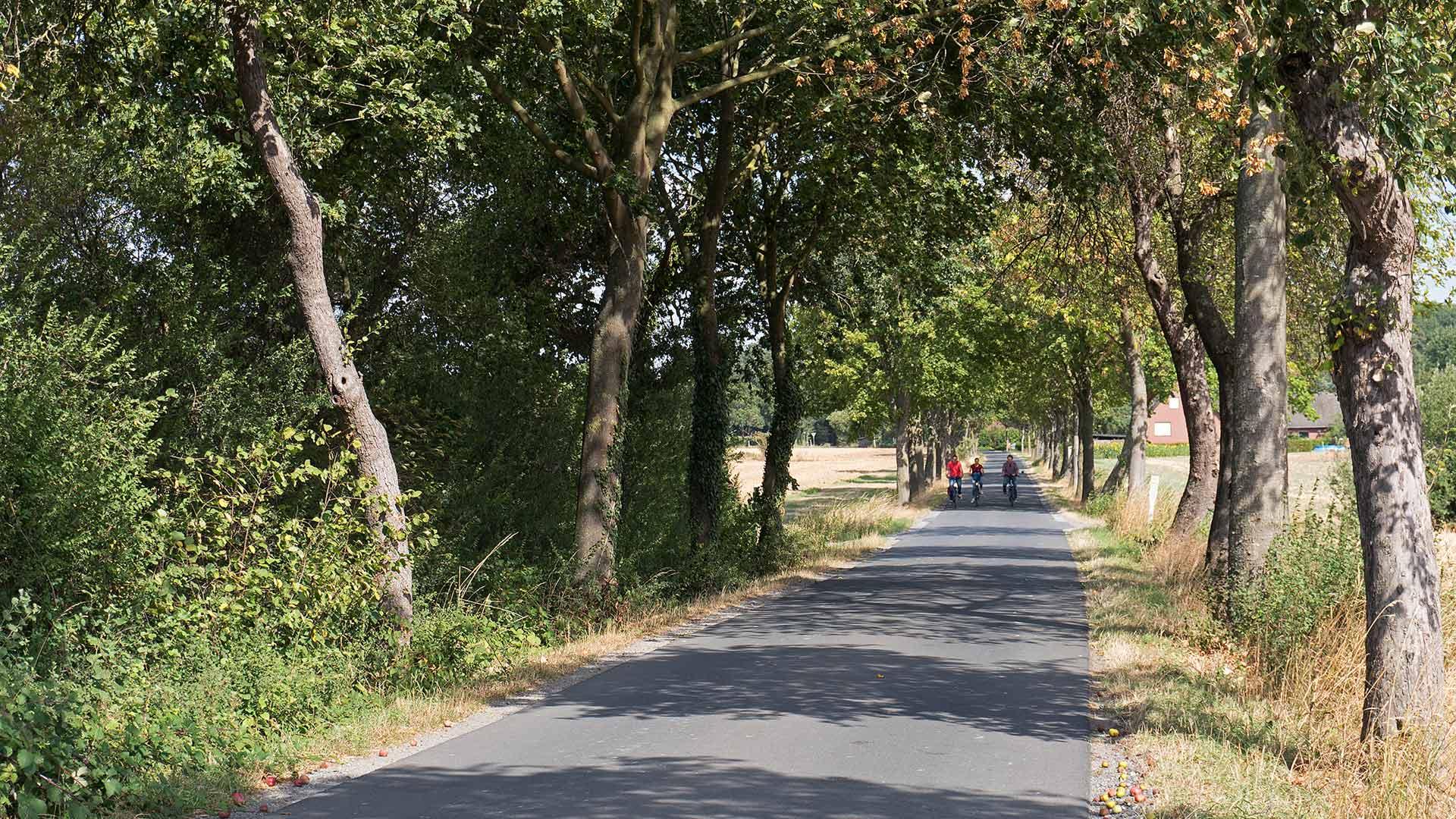 Fietsen over rustige landweggetjes in het Münsterland. © Kootstra