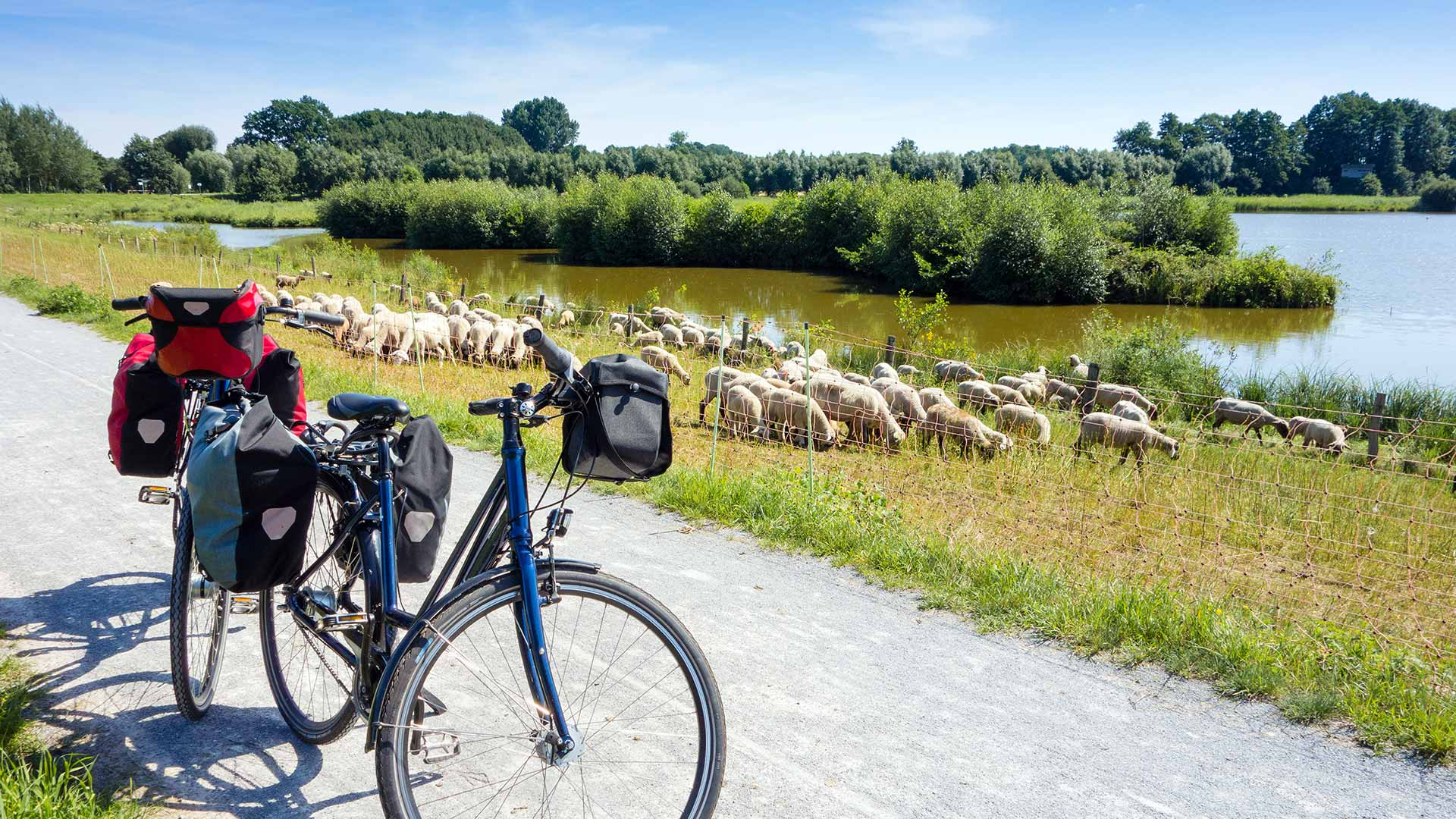 fietsvakantie-emsradweg-schapen-steinhorster-becken_A_166012377