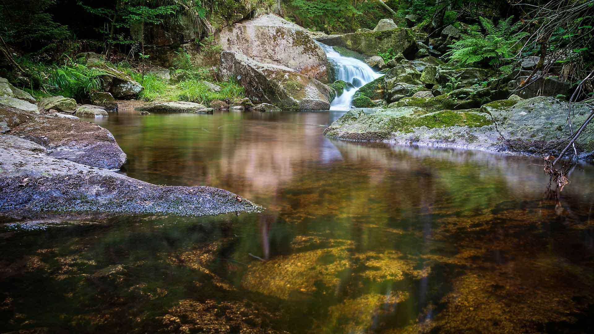 De wilde natuur van Nationalpark Harz.