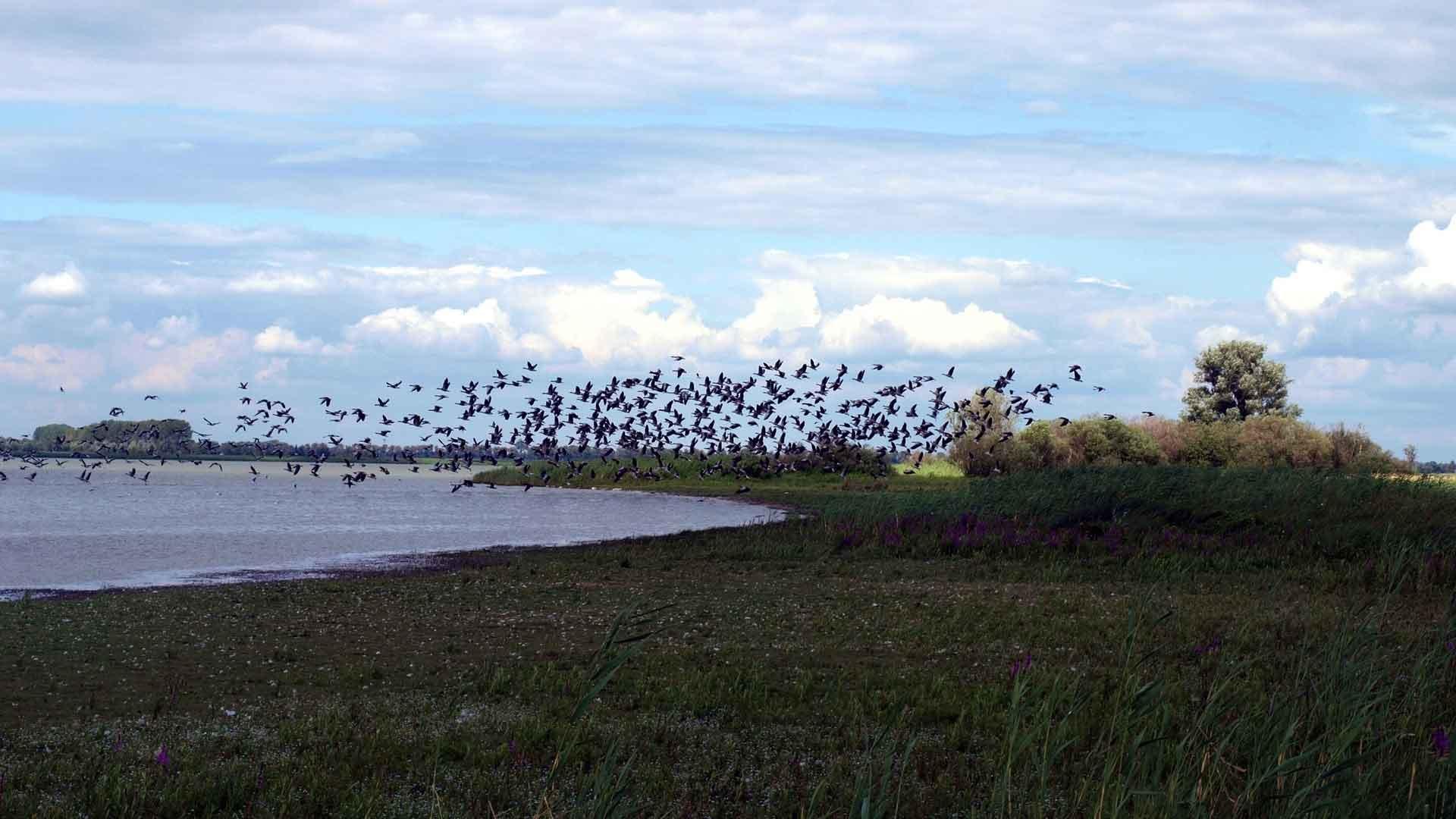 Vogels in het Havelland