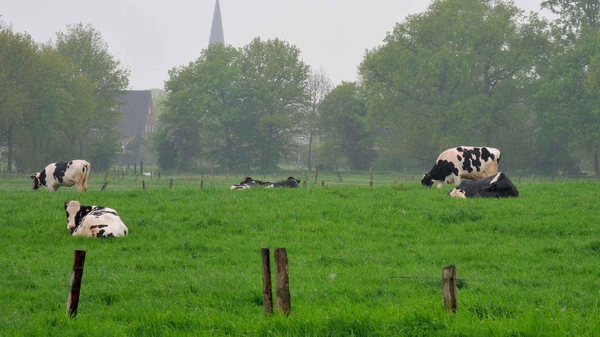Typisch landschap aan de Niederrhein