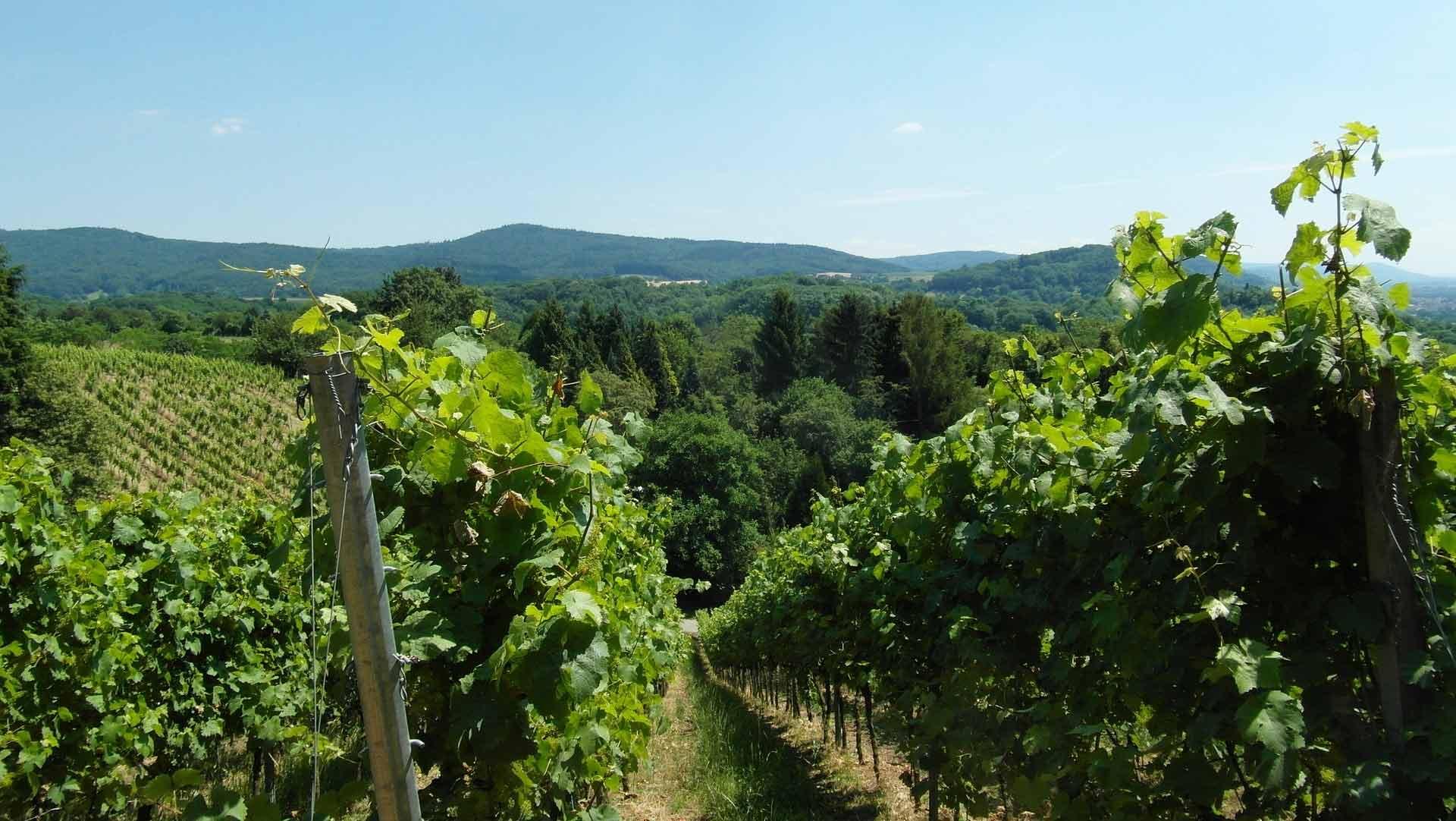 Fietsen door de glooiende wijnbergen van het Odenwald