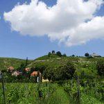 De wijnbergen rondom Radebeul in het Saksische Elbeland - een van de hoogtepunten tijdens je fietsvakantie langs de Elbe.