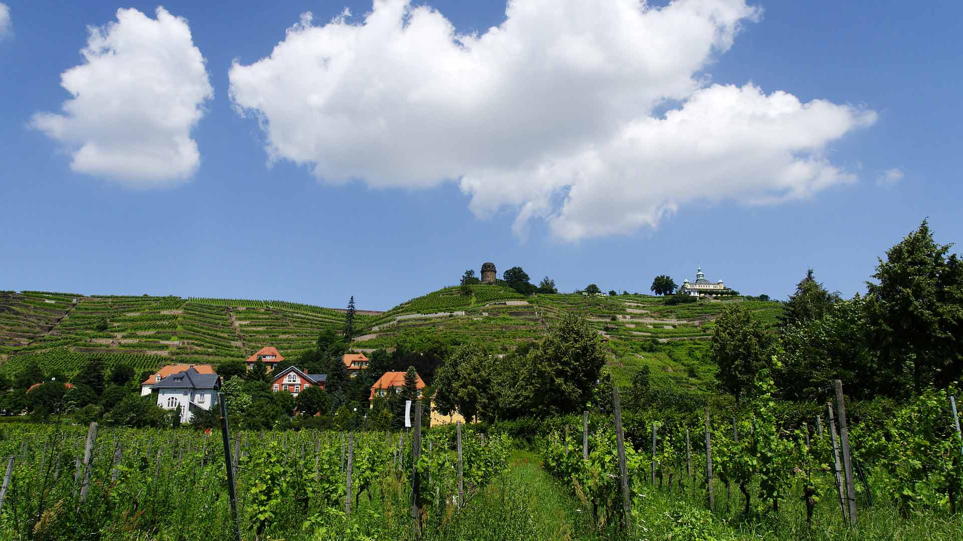 De wijnbergen rondom Radebeul in het Saksische Elbeland.