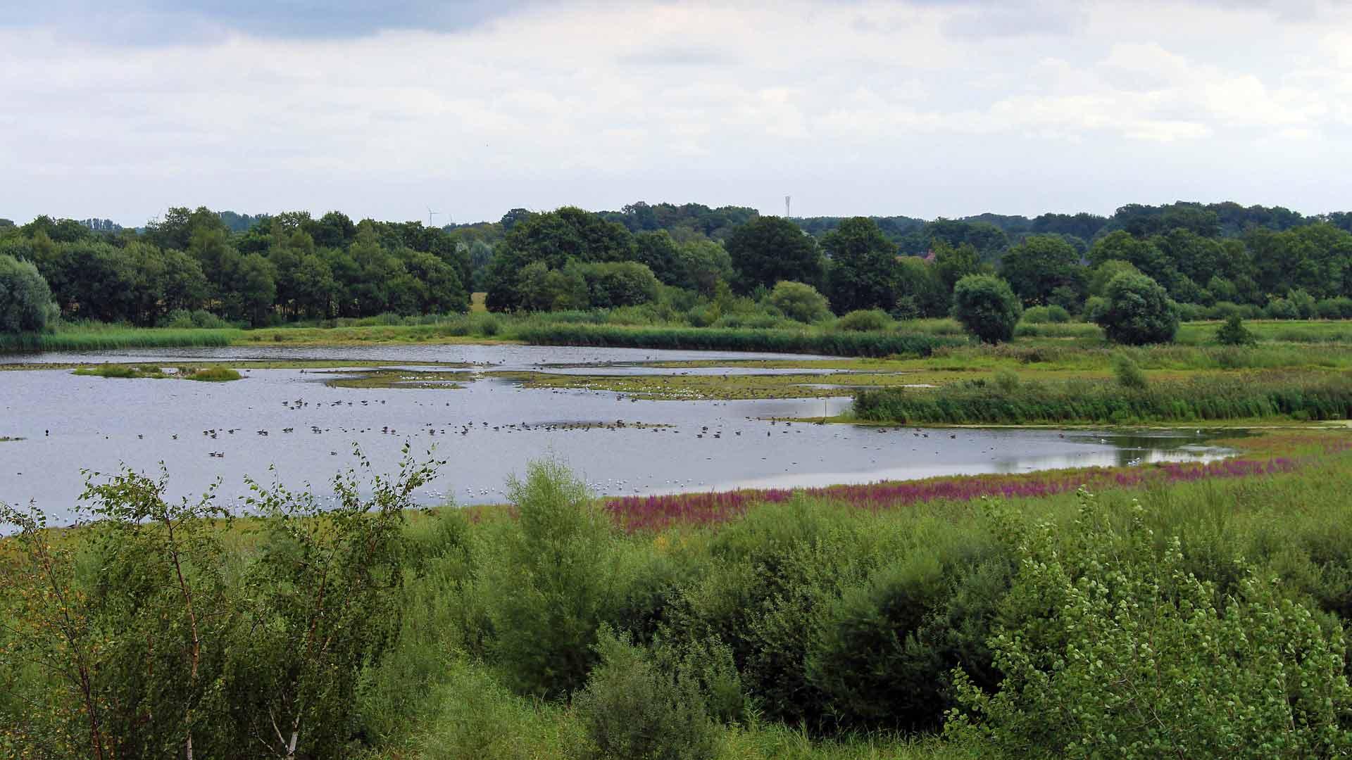 Het natuurgebied de Rieselfelder ligt net buiten Münster.