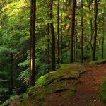 Tijdens deze groepsreis fietsen in het Thüringer Wald zit je midden in het groene hart van Duitsland. n Duitsland genoemd.