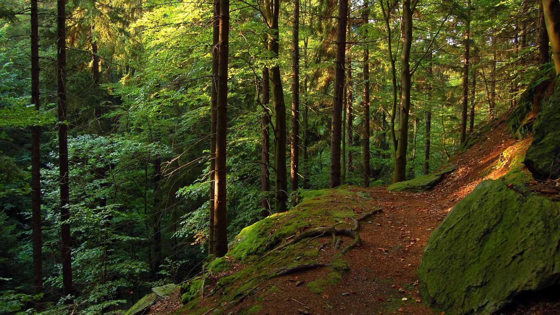 Het Thüringer Wald wordt ook wel het groene hart van Duitsland genoemd.