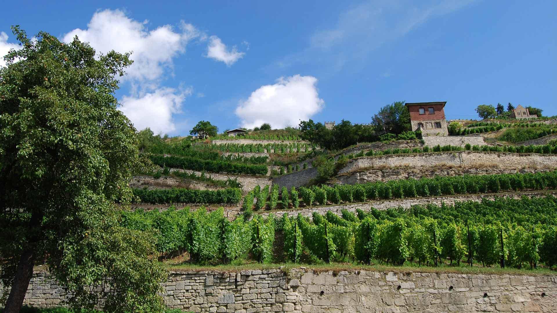 De wijnbergen bij Freyburg maken deel uit van het wijngebied Unstrut.