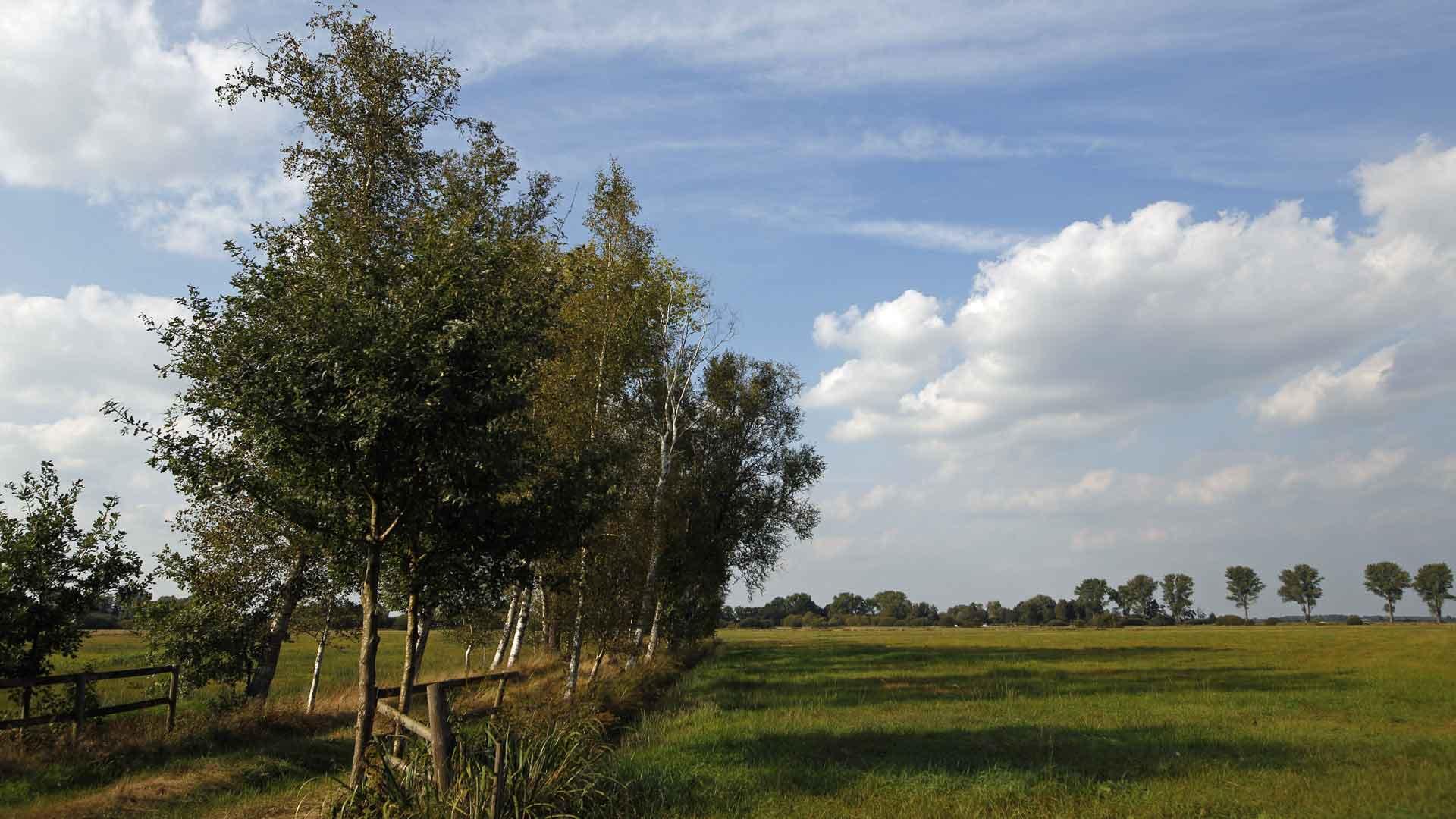 Het landschap van het Teufelsmoor rondom Worpswede is weids met hier en daar wat berken.